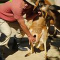 Photos: 東山動植物園:アカカンガルーの袋の中 - 2