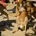 写真: 東山動植物園:アカカンガルーの袋の中 - 12