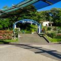 東山動植物園:満開だったバラ園のバラ - 1
