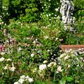 東山動植物園:満開だったバラ園のバラ - 7