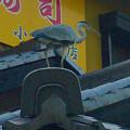 写真: 大山川沿いの寿司屋の前にいたアオサギ - 5