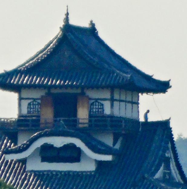 写真: 犬山駅から見えた、落雷でシャチホコが壊れた犬山城(2017年7月15日) - 3