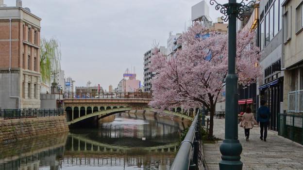 すでに満開&葉桜だった納屋橋近くの堀川沿いの桜(四季桜、2018年3月18日) - 22