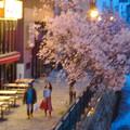すでに満開&葉桜だった納屋橋近くの堀川沿いの桜(四季桜、2018年3月18日) - 34