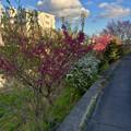 綺麗な花が咲いていた大山川沿い - 1