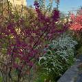 綺麗な花が咲いていた大山川沿い - 2