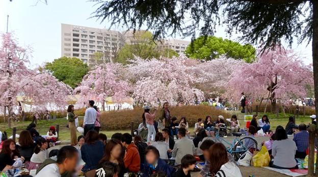 ものすごく沢山の花見客がいた鶴舞公園(2018年4月1日) - 10