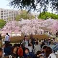 Photos: ものすごく沢山の花見客がいた鶴舞公園(2018年4月1日) - 10