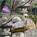 写真: 東山動植物園:パンプキン顔(ジャック・オー・ランタン)が浮かび上がって見えた中国庭園の石灯籠 - 14