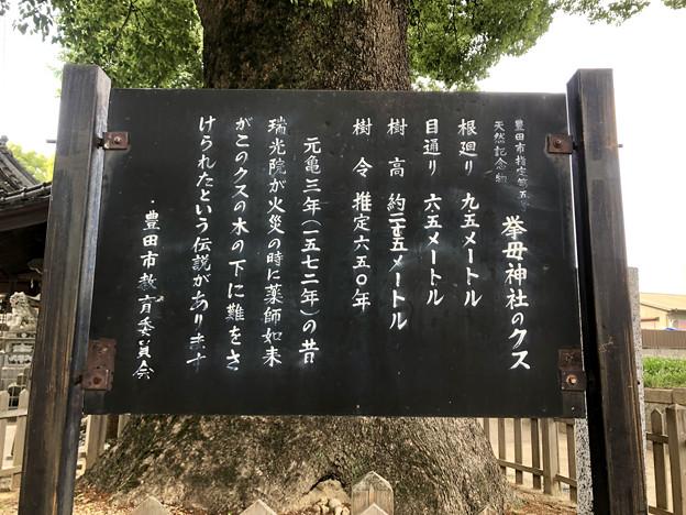 挙母神社 No - 40:大クス