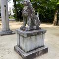 写真: 挙母神社 No - 56:ユーモラスな狛犬