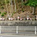 Photos: 高徳院 No - 1:桶狭間古戦場から見た沢山のお地蔵様