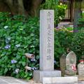 Photos: 高徳院 No - 19:今川義元本陣跡