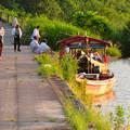 写真: 木曽川沿いから見た鵜飼い No - 7