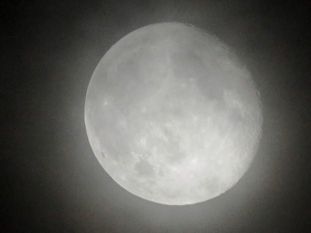 薄曇り越しに見た満月 - 7