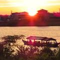 写真: 木曽川沿いから見た鵜飼い No - 9