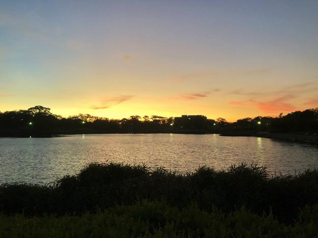 記録的な暑さの日の夕方の落合池 - 1
