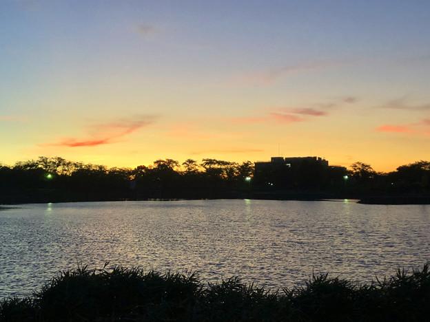 記録的な暑さの日の夕方の落合池 - 2