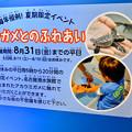 Photos: 名古屋港水族館AQUA LIVE in ミッドランドスクエア 2018 - 12:子ガメとのふれあい案内