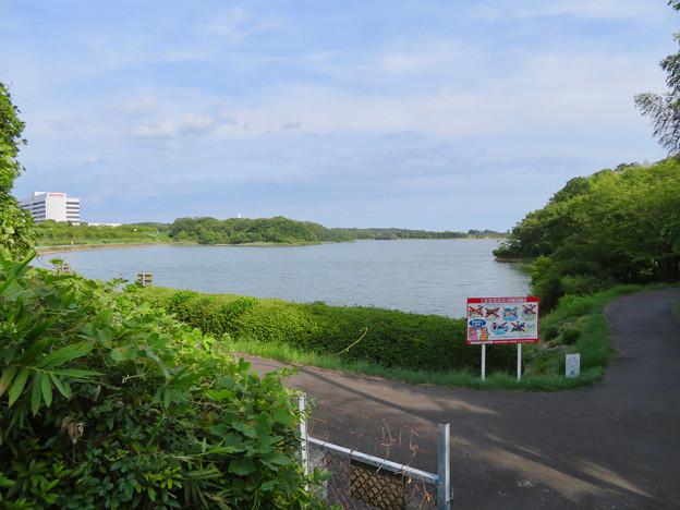 愛知池 No - 1