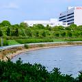 写真: 愛知池 No - 5:池沿いにあるDENSOの工場