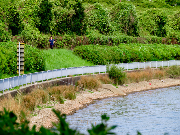 愛知池 No - 6:池沿いのランニングコース