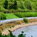 写真: 愛知池 No - 6:池沿いのランニングコース