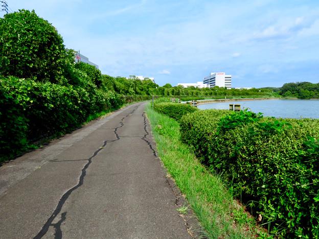 愛知池 No - 7:池沿いのランニングコース