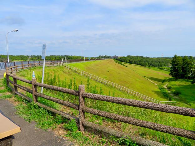 愛知池 No - 49