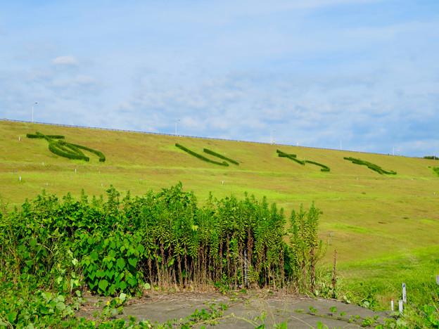 愛知池 No - 61:斜面に「あいち池」の文字