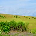 写真: 愛知池 No - 61:斜面に「あいち池」の文字
