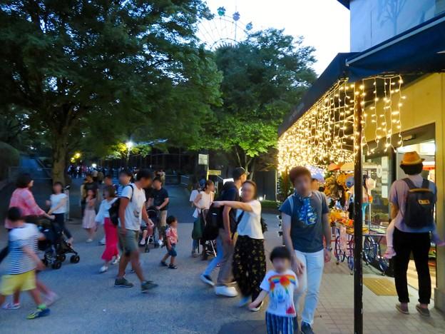 東山動植物園ナイトZoo 2018 No - 32