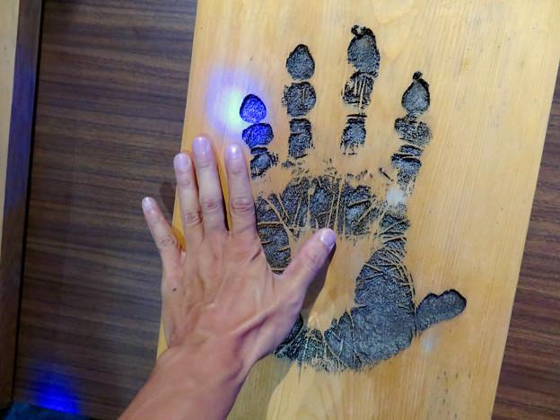 東山動植物園ナイトZoo 2018 No - 40:ゴリラの手形