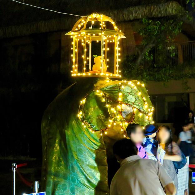 東山動植物園ナイトZoo 2018 No - 55:スリランカの「ペラヘラ祭」風の装飾がなされてた象の像