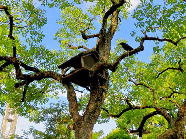 東山動植物園 2018年8月 No - 2:ゾージアム前の木に謎の…鳥小屋?