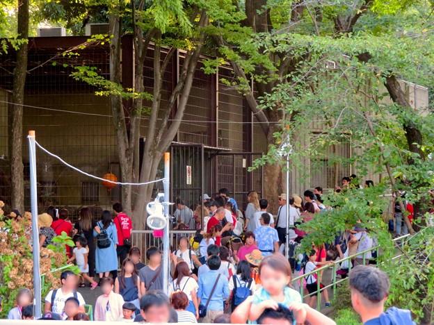 東山動植物園 2018年8月 No - 16:沢山の人がいたトラ舎