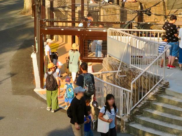 東山動植物園 2018年8月 No - 18:覆いや見学ゾーンができたペンギン舎