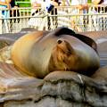 写真: 東山動植物園 2018年8月 No - 29:ぐっすり寝ていたアシカ