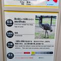 写真: 東山動植物園 2018年8月 No - 32:エミューの説明(泳ぎも得意!?)