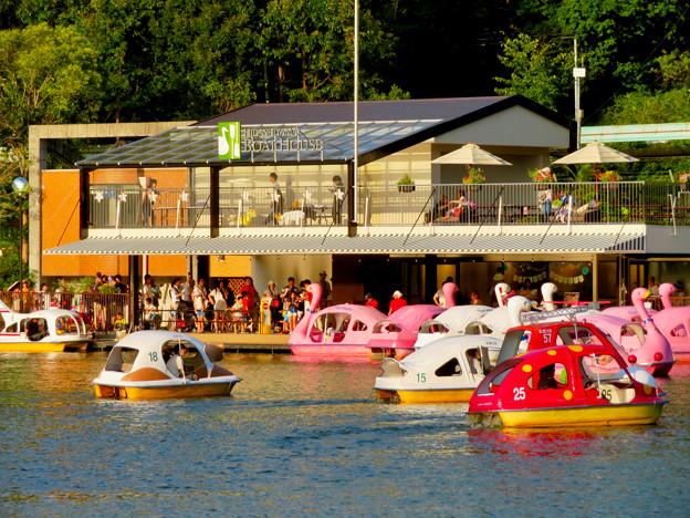 東山動植物園 2018年8月 No - 34:沢山の人がボートに乗っていた上池