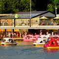 写真: 東山動植物園 2018年8月 No - 34:沢山の人がボートに乗っていた上池