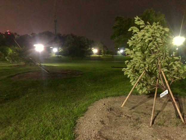 台風21号:強風の影響で倒れていた桃花台中央公園の木 - 3