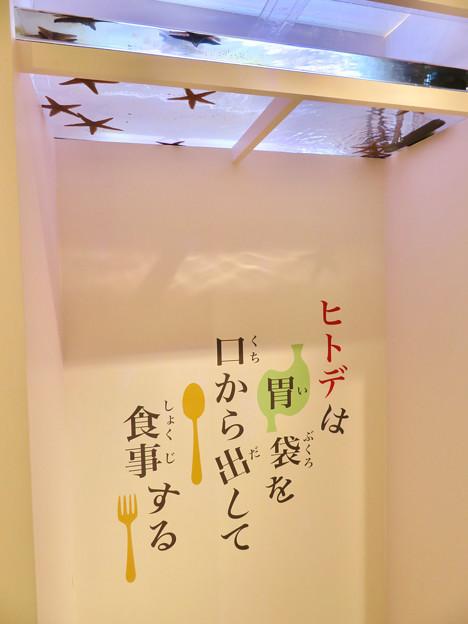 ざんねんないきもの展 2018 No - 8:ヒトデ(トゲモミジガイ)