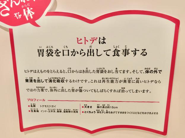 ざんねんないきもの展 2018 No - 9:ヒトデ(トゲモミジガイ)の説明