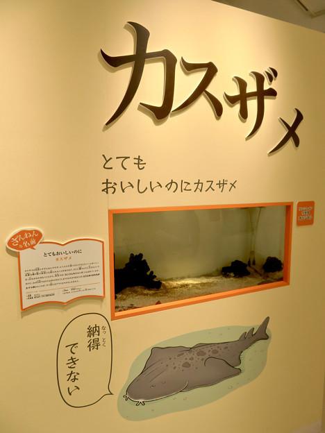 ざんねんないきもの展 2018 No - 90:カスザメ