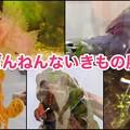 Photos: ざんねんないきもの展 2018 No - 124:まとめ