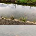 Photos: 「Camera7」で撮影した内津川の鯉 - 2