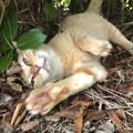 リンネレンズ:猫の種類判別するも「猫」としか表示されず… - 1