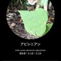 Photos: リンネレンズで猫判定(アビシニアン)