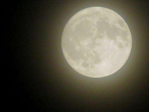 落合公園から見た薄曇りの中秋の満月(2018年9月24日) - 5